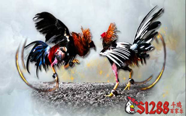 Rahasia Menang Judi Sabung Ayam Online di Agen S128
